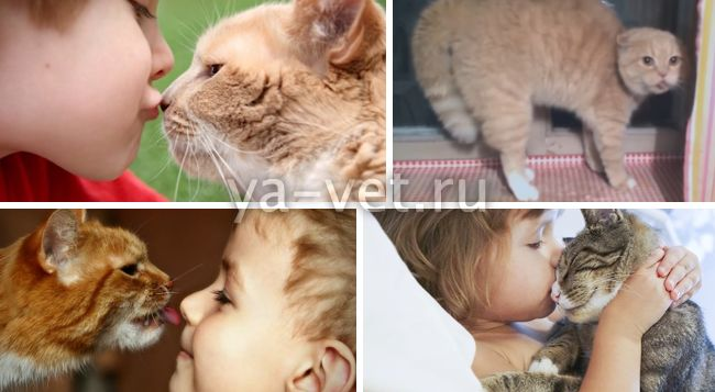 огуречный цепень у кошек лечение