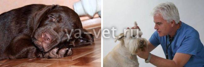 онкология у собак симптомы