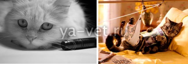 перелом бедра у кота