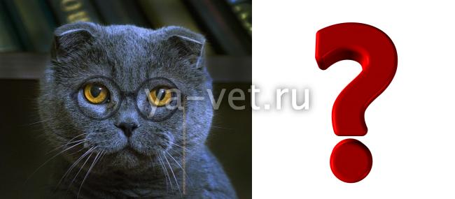 перелом шейки бедра у кота
