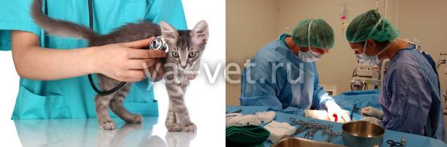 перелом у кота