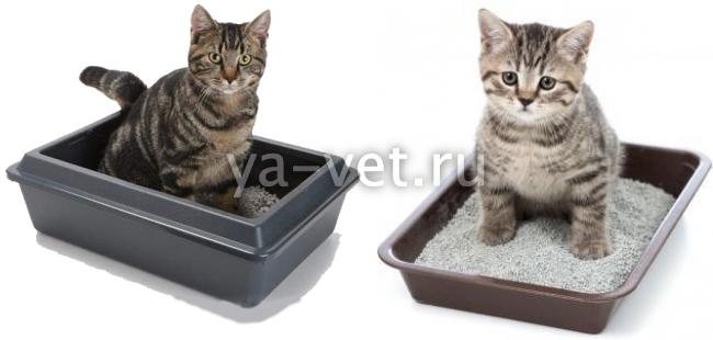 Как определить метит кот или нет