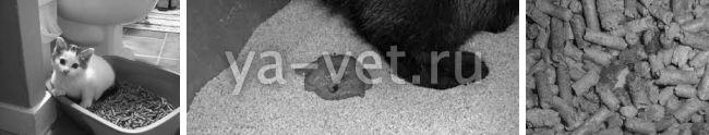 почему у котенка кал с кровью