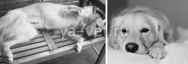 последствия стерилизации собак