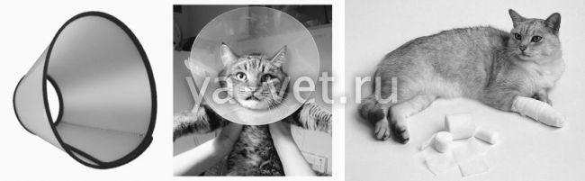 операция коту мягкие лапки