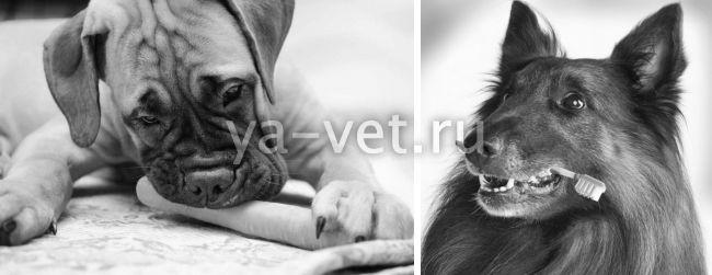 с чем связано воспаление десен у собак