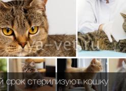 Кастрировать кота в дзержинском
