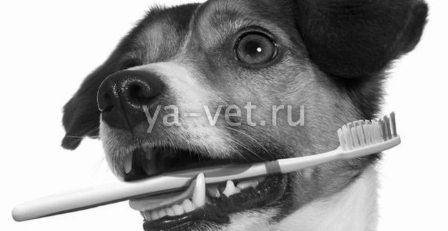 стоматология для собак в Москве