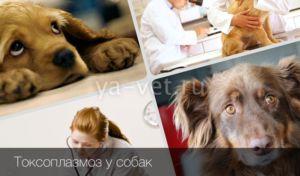 контакты ветеринарный центр