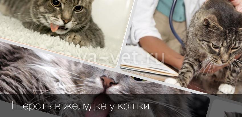 Шерсть в желудке кошки как вывести в домашних условиях