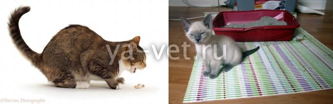 у котенка понос и рвота что делать