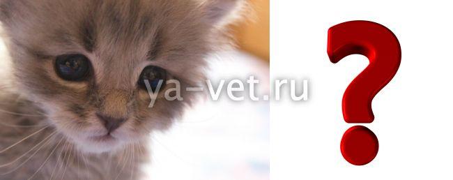 у котенка рвота и понос
