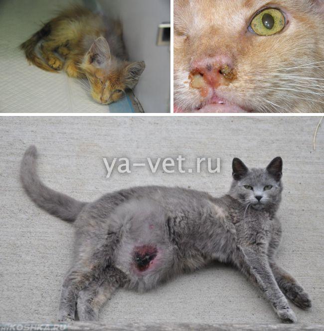 ветеринар для кошки на дом