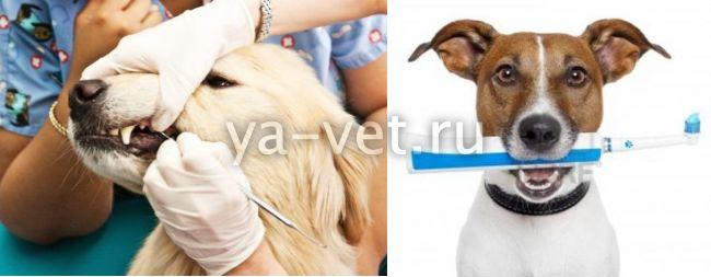 ветеринар стоматолог Москва