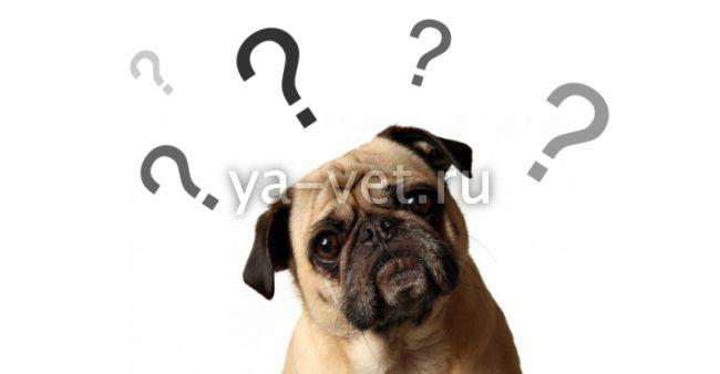 Ветеринария болезни собак и их признаки и лечение