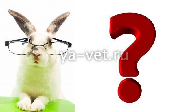 вгбк у кроликов симптомы