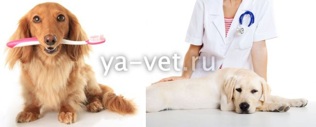 воспаление десен у собак