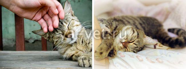 выпадение шерсти у кошек причины и лечение