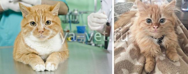 заболевание глаз у кошек пленка на глазах