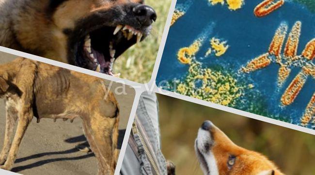 заболевания щенков