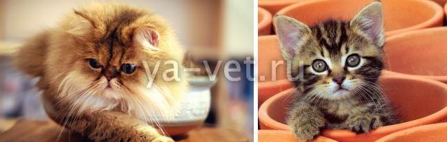 болезни котят симптомы лечение