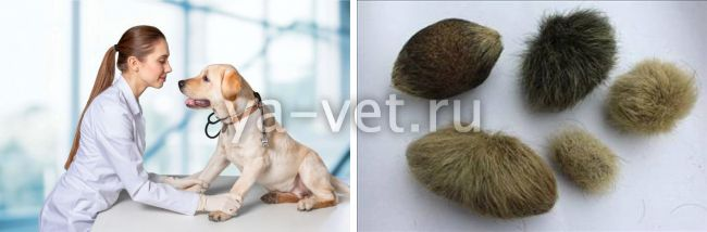 алопеция у собак лечение