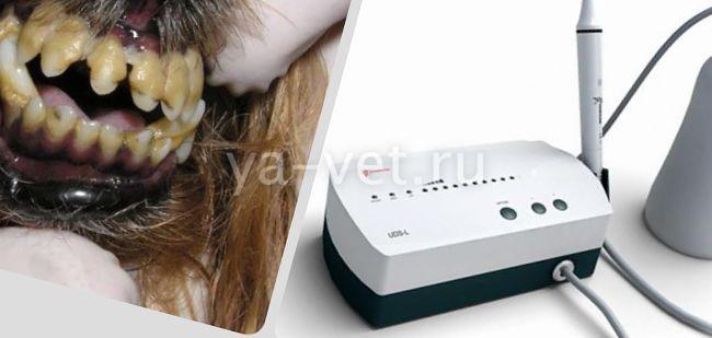 Ультразвуковая чистка зубов для собак