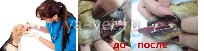 почистить зубы собаке недорого