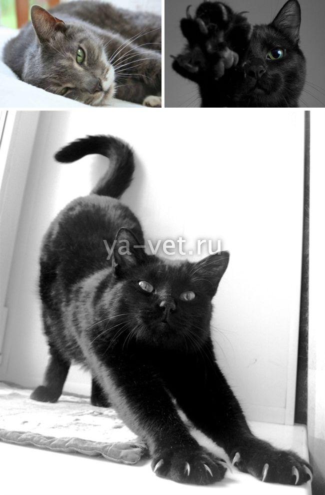 дирофиляриоз у кошек симптомы лечение