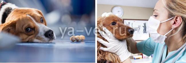 экзема у собаки причины