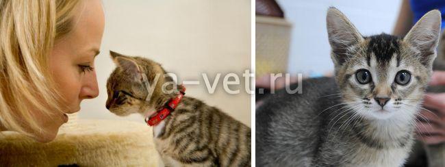 гастрит у кошек симптомы