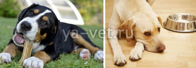 гастроэнтерит у собак