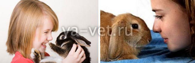инфекционный ринит у кроликов лечение