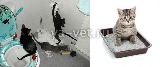 как заставить котенка сходить в туалет