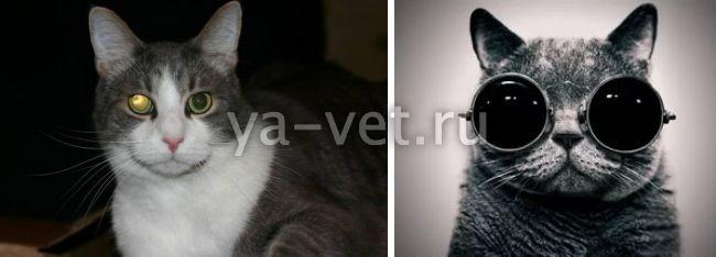 катаракта у котов