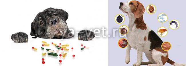 клещевой энцефалит у собак симптомы лечение