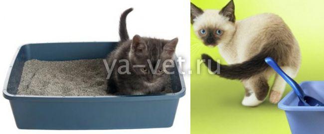 котенок не может сходить в туалет