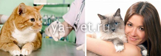 лейкопения у кошек симптомы и лечение. Профилактика заболевания