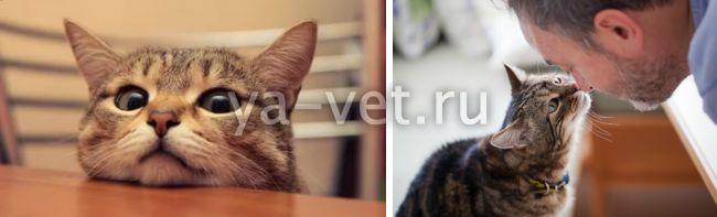 лимфома у кота прогноз