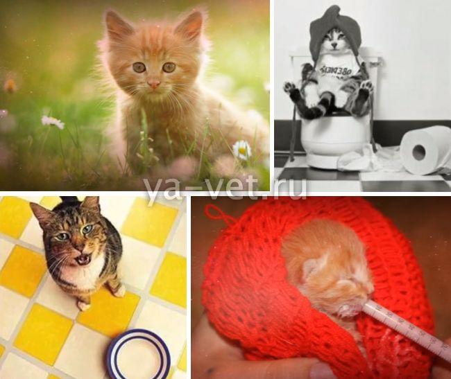 признаки панлейкопении у котят