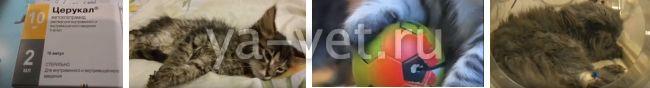 панлейкопения у котят симптомы