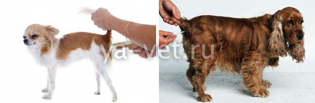 высокая температура у собаки причина