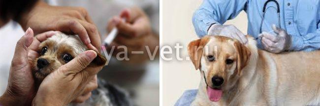 прививка для собак комплексная