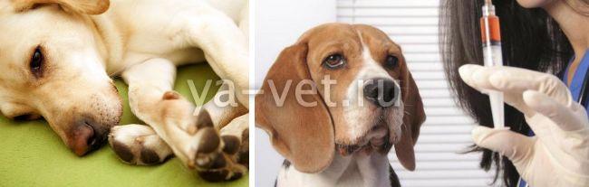 прививка от чумки щенку когда делать