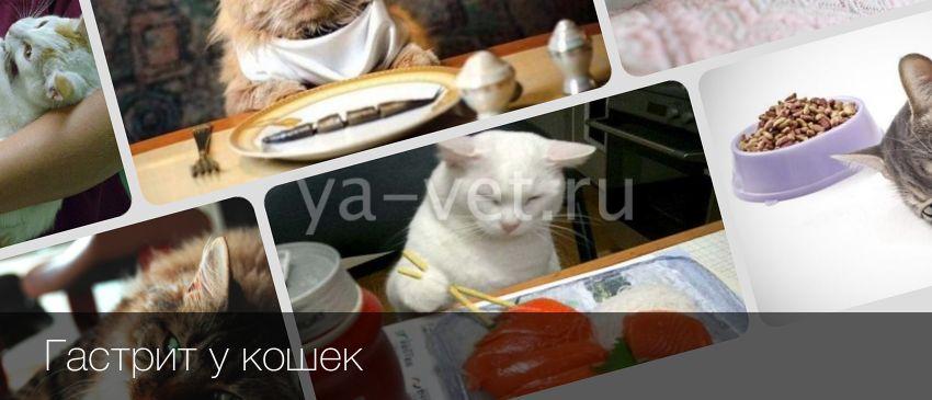 Симптомы и лечение гастрита у кошек: уремический и другие формы
