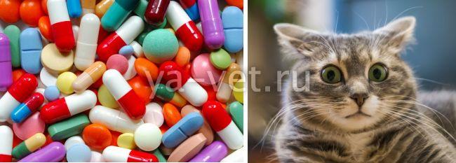 саркоптоз у кошек, что делать?