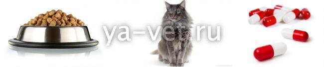 у кота недержание мочи что делать