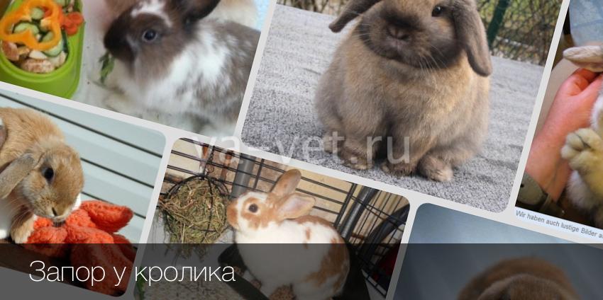 Запор у кролика - Болезни кроликов