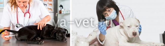 у собаки температура что делать
