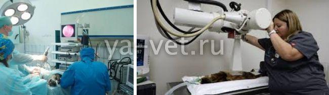 лучшие хирурги ветеринары Москвы